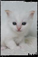 Les bébés de Foxy et Pepper Grace2-363219d