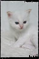 Les bébés de Foxy et Pepper Grace4-36321b2